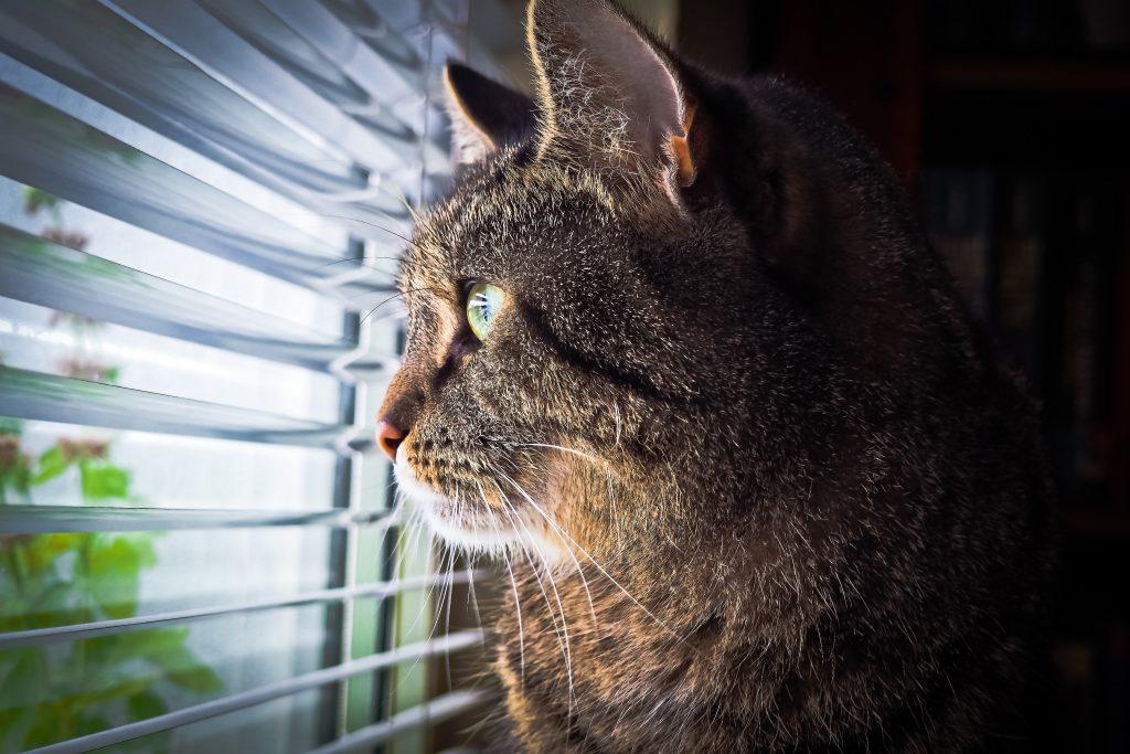 żaluzje czasnarolety kot