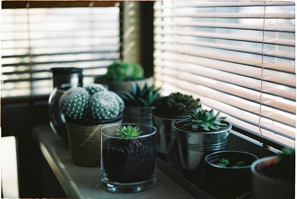 Zielone rośliny na parapecie przy oknie zasłoniętym żaluzjami